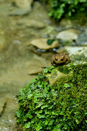 A frog on a rock covered with moss