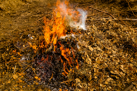Burning of dry fallen leaves and branches in the spring