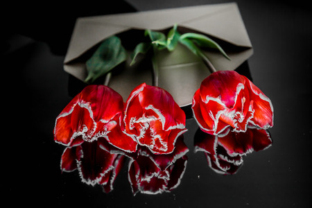 three flowers of a red tulip lie on a black mirror background Stock Photo