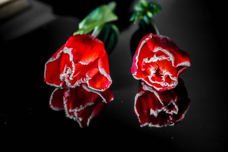 two flowers of a red tulip lie on a black mirror background