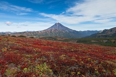 The autumn tundra against a volcano on Kamchatka