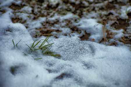 Winter photographing nature in Moscow. Photos of winter backgrounds for design.