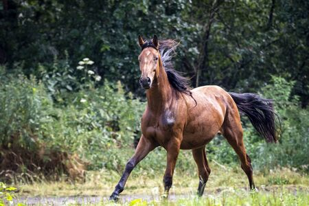 A portrait of a horse almost completely after running for a while around in the field in front of a forest.