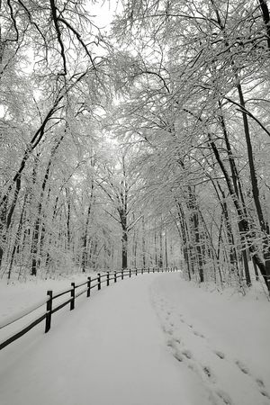 Snowy pathway with tracks winding through snow-covered forest. photo
