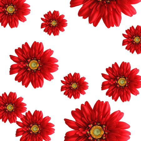 bright background of red silk gerbera daisies on white backdrop Фото со стока