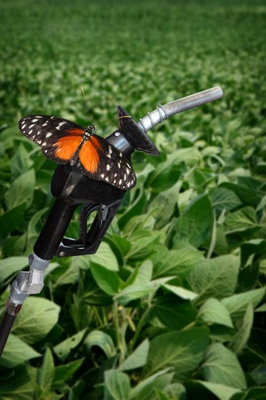 distill: vertical image of orange butterfly on gasoline nozzle. Stock Photo