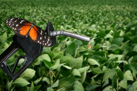 horizontal image of orange butterfly on gasonline nozzle
