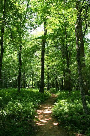 hiking trail through the woods Фото со стока