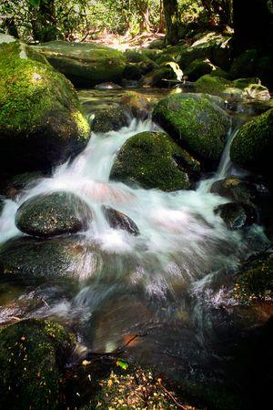cascade in a small creek