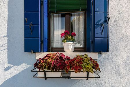 An open window with blue shutters and a red flower in a vase on a sunny day. 写真素材