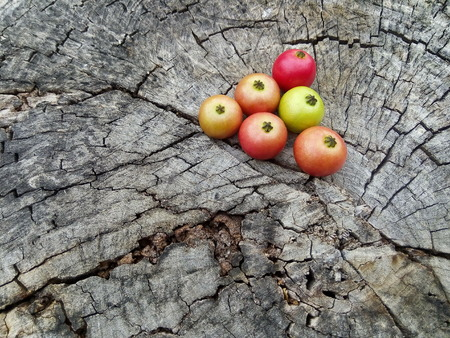 dimming: Fruit in Thailand are arranged on old wood. Wood darkens Stock Photo
