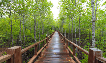 mangrove forest: boardwalk in Mangrove forest, southern, Thailand Stock Photo