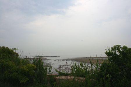 sandbar: Sandbar thru Reeds