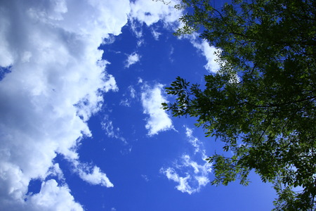 Deep green against a sky of blue
