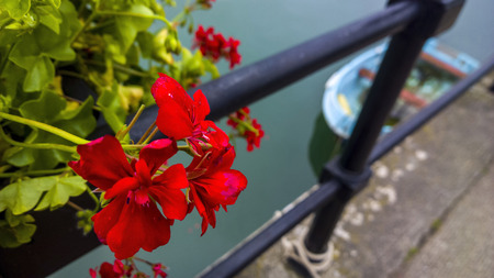 reg: Taken 1st September 2014, reg and green flowers with a boat in the background amongst black railing