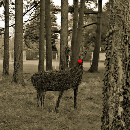 Raindeer made from wicker in a copse of trees, using a cross hatch filter colour editing used to most of the image and red nose enhanced 写真素材