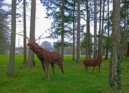 copse: Raindeer made from wicker in a copse of trees