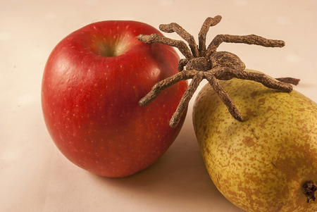 crawly: Isolated apple and pear with a spider on a white background Stock Photo