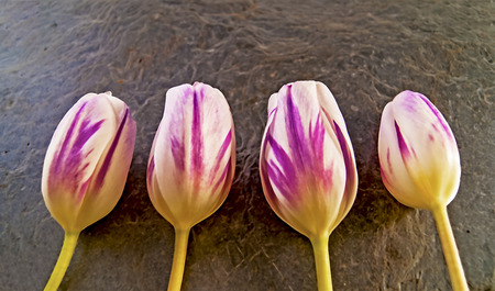 illustration of pink and purple tublips, created using median noise reduction with some colors removed, easter flowers illustration
