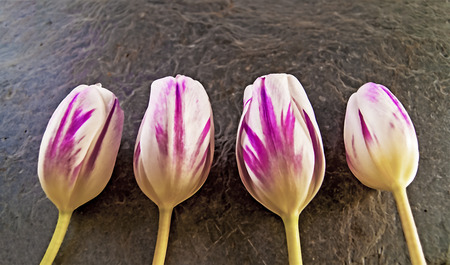 median: illustration of pink and purple tublips, created using median noise reduction with some colors removed, easter flowers Stock Photo