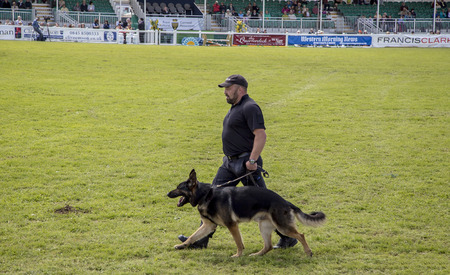 police dog: Wadebridge Cornwall UK June 6 2015  Police dog handler with his dog