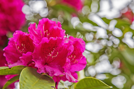 red pink: Close up picture of a flower, bright red pink blossom Stock Photo