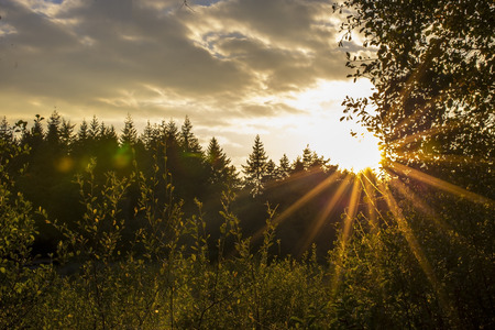shinning leaves: Showing a strong sunset at Stover lake shot at high aperture, to create sun streaks and flares, showing suns energy striking the land, Renewal energy etc, Stock Photo