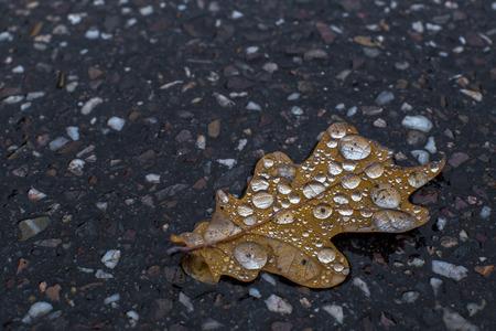 wet leaf: Showing a close up shot of a wet leaf Stock Photo