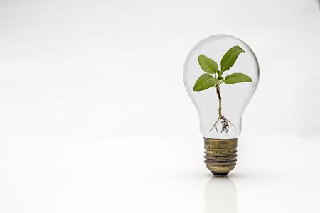 Affichage d'un buld isolé et plante sur un fond blanc Banque d'images - 54881183
