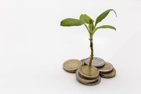 Zeigen einer Pflanze, die aus einem Haufen Geld wachsenden Investitionen und Einsparungen als Symbol