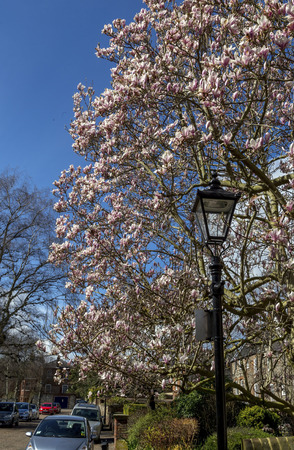 lampost: Lampost ammongst a blossom tree in summer . Stock Photo