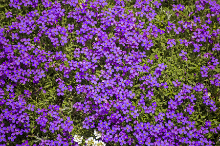 l natural: Showing a group of purple natural flowers growing on a wall