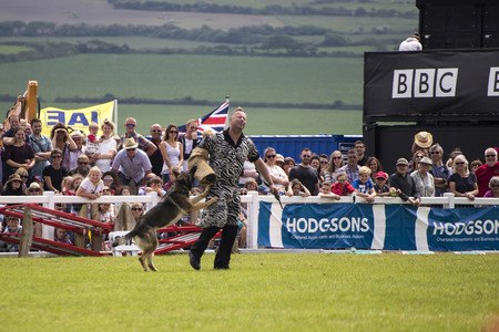 sniffer: Wadebridge, Cornwall, UK, June 11 2016 - Showing police dog display team in a green grass field at a local show. Editorial