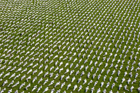 shrouds: Exeter, Devon, UK, July 6 2016 - Showing an arists recreation and installation at a public park, symbolising the 19240 troops that died on the first day of the battle of the somme by creating 19240 individual, see http:www.thesomme19240.co.uk