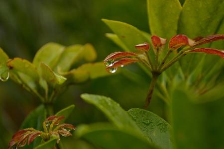 Morning Dew Reklamní fotografie