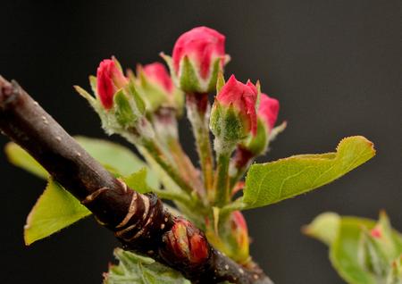 Budding flower Reklamní fotografie