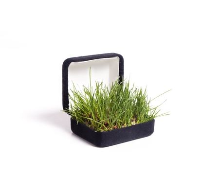 Bright green grasses pop out of a black jewelry box