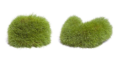 amorphous: Two amorphous shaped made of grass against a white background  Stock Photo