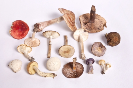 A collection of inedible and edible mushrooms against a white background.