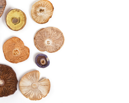 A variety of mushroom caps designed in a pattern against a white background.