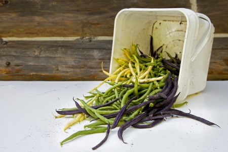 A pile of freshly picked green beans spilling out of a plastic bucket.