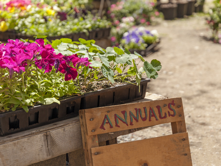 A sign with and without lettering in a garden center full of blossoming annuals and other plants.