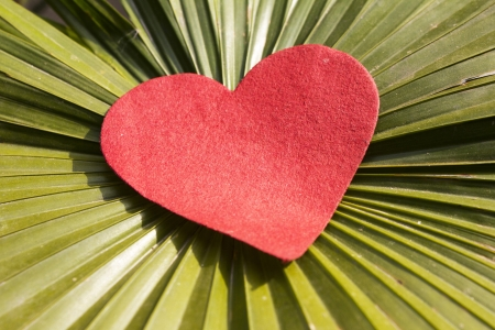 red shape heart with green leaf photo