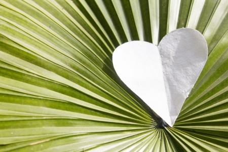 white heart shape over leaf photo
