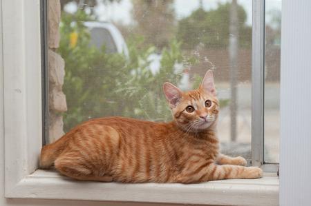 pal: Furry Tabby cat lying on window sill