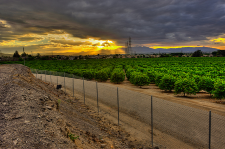 Rays of sunshine over the citrus orchard