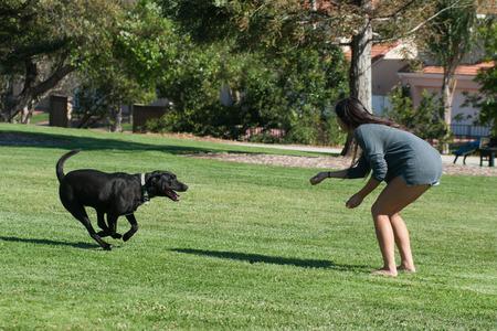 彼のお気に入りのティーンエイ ジャーに走っているラブラドール犬。 写真素材