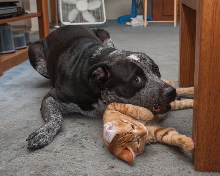 buddies: Wrestling buddies on the carpet Stock Photo
