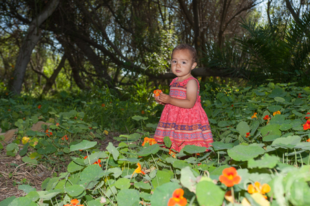 Female toddler wandering through the wild flowers.