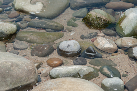 Exposed tops of rocks in the shallow tide pool. Zdjęcie Seryjne